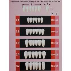 Гарнитуры передних нижних зубов С2/12-зубы искусственные пластмассовые Эстедент-02